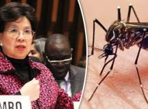 Zika Virus Is Global Public Health Threat: WHO