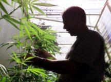 San Jose Bans Recreational Marijuana