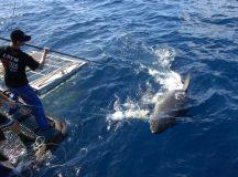 The Ecology of Shark Bay in Australia